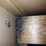Bed Bug Infestation – bed frame