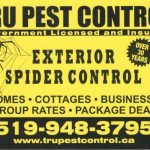 Spider Control Service Windsor and Essex County