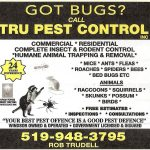 Pest control Service Windsor and Essex County