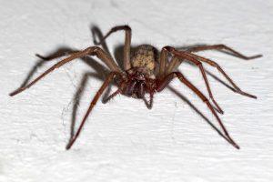 Spider Control Windsor, Essex, Leamington