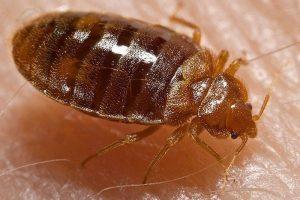 Pest Control Services, Tecumseh, Harrow, Tilbury