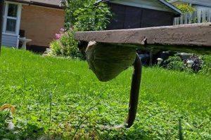 Hornet and Wasp Exterminator, Windsor, Kingsville, Essex